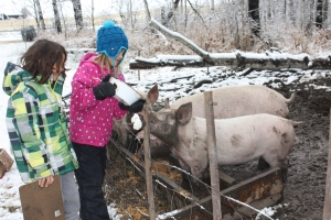 Ronan and his Cousin Feeding the Pigs